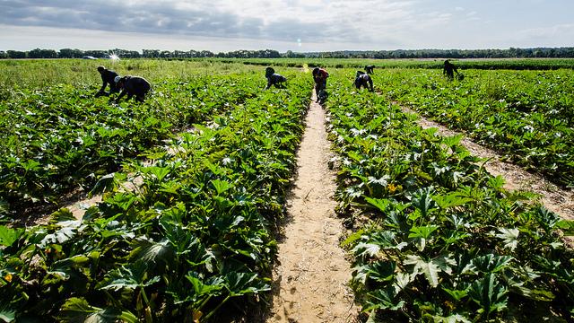 Rehabilitation of the irrigation scheme Mbreshtan